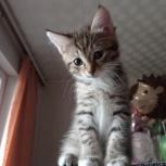 Отдаю очаровательную кошечку, Екатеринбург