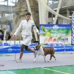 Дрессировка собак., Екатеринбург