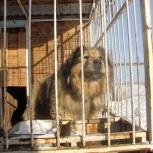 Передержка для собак-гигантов, Екатеринбург