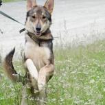 Собака в добрые руки, Екатеринбург