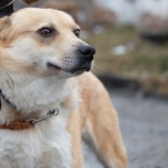 Пёс Роки нужен хозяин!, Екатеринбург