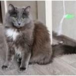 Пушкин котик, примерно 8 месяцев, Екатеринбург