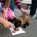 Замечен кот, Екатеринбург