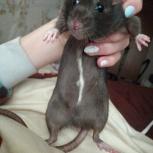 Пропала крыса в малом истоке, Екатеринбург
