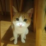 Пропала бело-рыжая кошка, Екатеринбург