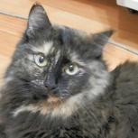 Потерялась кошка в Балтыме, Екатеринбург