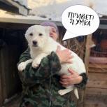 Беленькая милая девочка-щенок, Екатеринбург