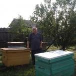 Пчелы, Екатеринбург