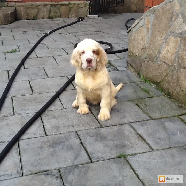Подать объявление щенки в екатеринбурге дать объявление услуга дизайн москва