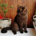 Британский кот, Екатеринбург