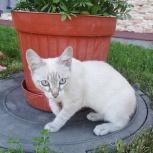 Отдадим котёнка в добрые руки!!!, Екатеринбург