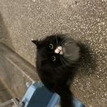 Найдена черно-белая пушистая кошка!, Екатеринбург