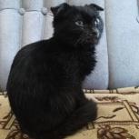 Ищу прежних или будущих хозяев котенку, Екатеринбург