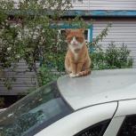 Пропал кот, Екатеринбург