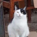 Кошечка Буся ждёт добрые руки, Екатеринбург