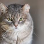 Харизматичный красавец кот Освальдо, Екатеринбург