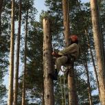 Спил деревьев на участке, обрезка веток, Екатеринбург