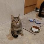 Найден молодой кот, котенок (Эльмаш), Екатеринбург
