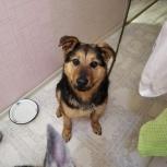 Найдена собака девочка, Екатеринбург