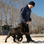 Дрессировка собак и воспитание щенков, Екатеринбург