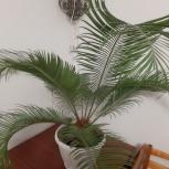Растение, Екатеринбург
