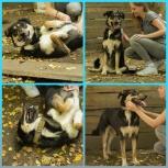 Собачка Мисси ищет дом, Екатеринбург