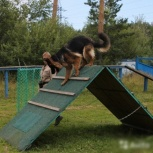 Дрессировка собак - специальная, спортивная дрессировки., Екатеринбург