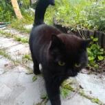 Чёрный кот, Екатеринбург
