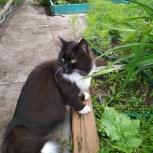 Найден кот, район лифтостроительного завода, Екатеринбург