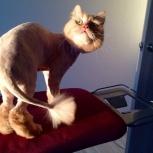Стрижка и экспресс-линька кошек у Вас на дому, Екатеринбург