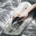 Пушистый кролик, Екатеринбург
