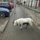 Потерявшаяся собака ходит в районе Зоопарка, Екатеринбург