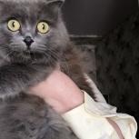 Найдена серая кошка, Екатеринбург