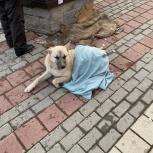 Замечен пёс, Екатеринбург