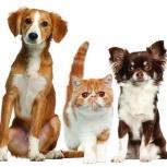 Ветеринар. Ветеринар на дом. Ветеринарная помощь, Екатеринбург