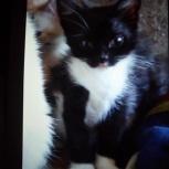 Котенок девочка черная с белым, Екатеринбург