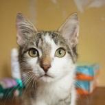 Ласковый и контактный кот-подросток Василий ищет дом, Екатеринбург