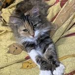 Потерялась кошка р-он Ю-З, Екатеринбург
