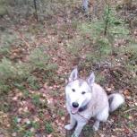 Пропала собака лайка, Екатеринбург
