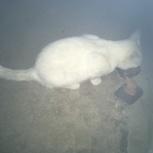 Белая кошечка найдена, Екатеринбург