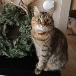 Потерялась кошка!, Екатеринбург
