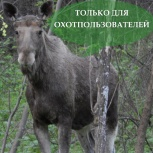 Ведение охотничьего хозяйства, охотустройство,  учетные работы, Екатеринбург
