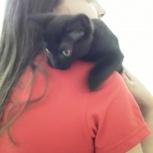 Отдам котенка в добрые руки, мальчик, Екатеринбург