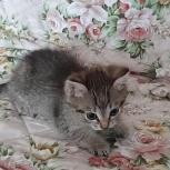Отдам котенка, Екатеринбург