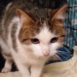Найден кот  на Белинского .Р-н метро Ботаника, Екатеринбург