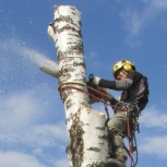 Спил деревьев. Альпинист, Екатеринбург