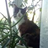 Потерялась кошка (убежала в кусты а бензоколонке лукойл 130км от екб), Екатеринбург
