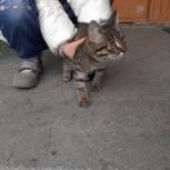 Найден котенок. Отдам даром в добрые руки, Екатеринбург