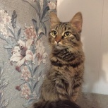 Найдена кошка эльмаш, Екатеринбург