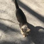 Найденная кошка/кот, Екатеринбург